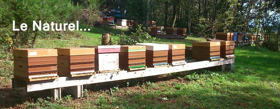 Rucher de production de propolis naturelle